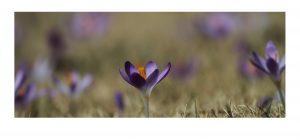 Small purple flower