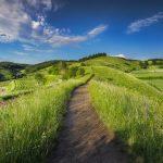 Hilly dirt path wandering through grassy fields
